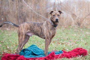 Shelter Pets (Dec27) (1 of 1)-3 Roamer