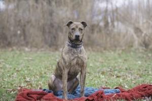 Shelter Pets (Dec27) (1 of 1)-4 Roamer