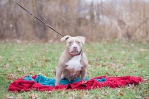 Shelter Pets (Dec27) (1 of 1)-5 Jasime