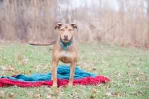 Shelter Pets (Dec27) (1 of 1)-9 Adorable