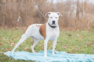 Shelter Pets (Dec27) (1 of 1) Philly